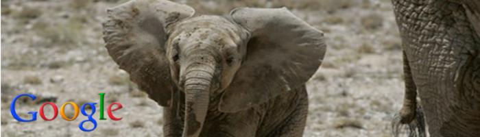 Éléphant - Google