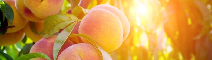 peach-fruit-cover