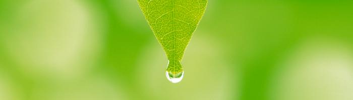 fresh-grass-cover
