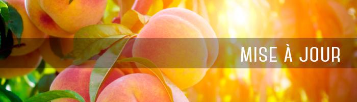 peach-maj-cover